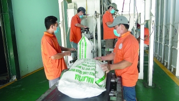 against the grain vietnam must shift to high quality rice exports