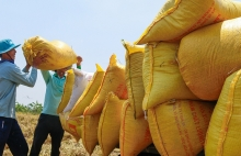 agro forestry fishery exports record trade surplus