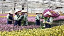 lam dong has more high tech flower vegetable growing project