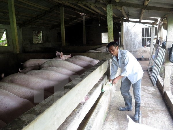 nam dinh thai binh develop disease free pig production for export