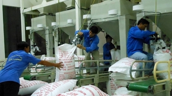 an giang earns over us 600 million in exports in nine months