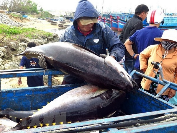 vietnams exporters advised to expand tuna exports to middle east