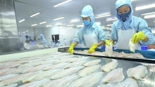 pangasius exports to us marker rocket in q3
