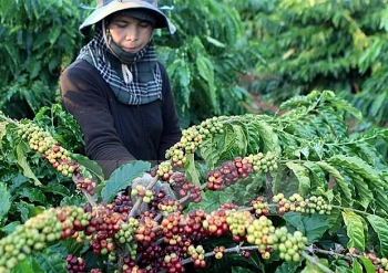 coffee exports down in nine months