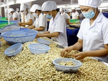 vietnams cashew nut exports to china surge in nine months