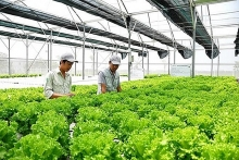japanese firms increase investment in vietnams agriculture