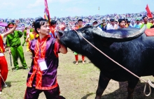 unique do son buffalo fighting festival