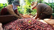 vietnams coffee exports jump to record high of 18 million tonnes