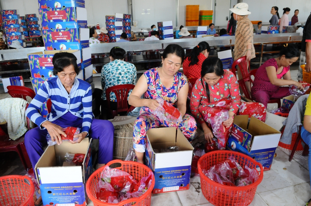 cooperatives bear fruit linking production with business