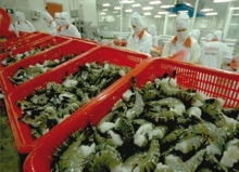 shrimp exports maintain key position