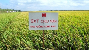 technological solutions in response to climate change introduced in mekong delta