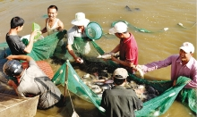 thanh hoas industry promotion activities contributing to increasing value of rural products