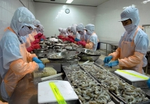 vietnam becomes australias largest shrimp supplier