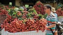 fruit and vegetable exports earns us 23 billion