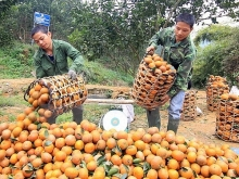 agricultural trade fair to take place in hanoi