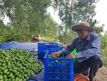 vietnamese seedless lime sees great chance to enter japanese market