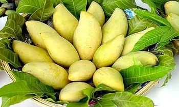 vietnamese mango clears its way to us market