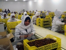algeria to export dates to vietnam