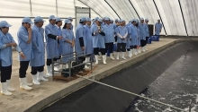 first breeding shrimp farm in vietnam meets oie standards