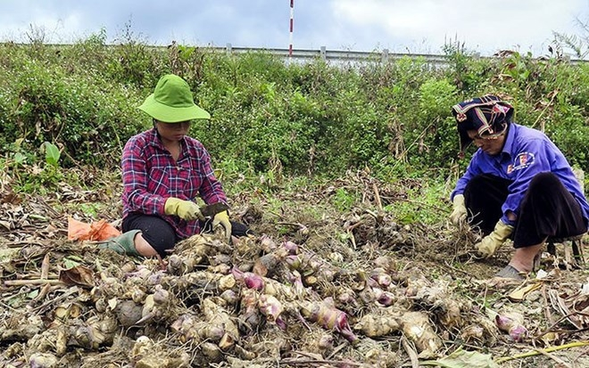 plant of vietnamese firm inaugurated in lao province