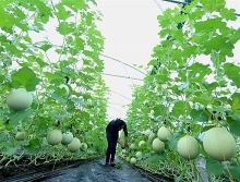 can tho agriculture revenues greatly outgrow yearly target