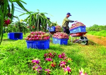 vietnam struggles to overcome trade barriers to farm exports