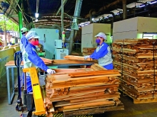 vietnam logs record year of timber and wood exports