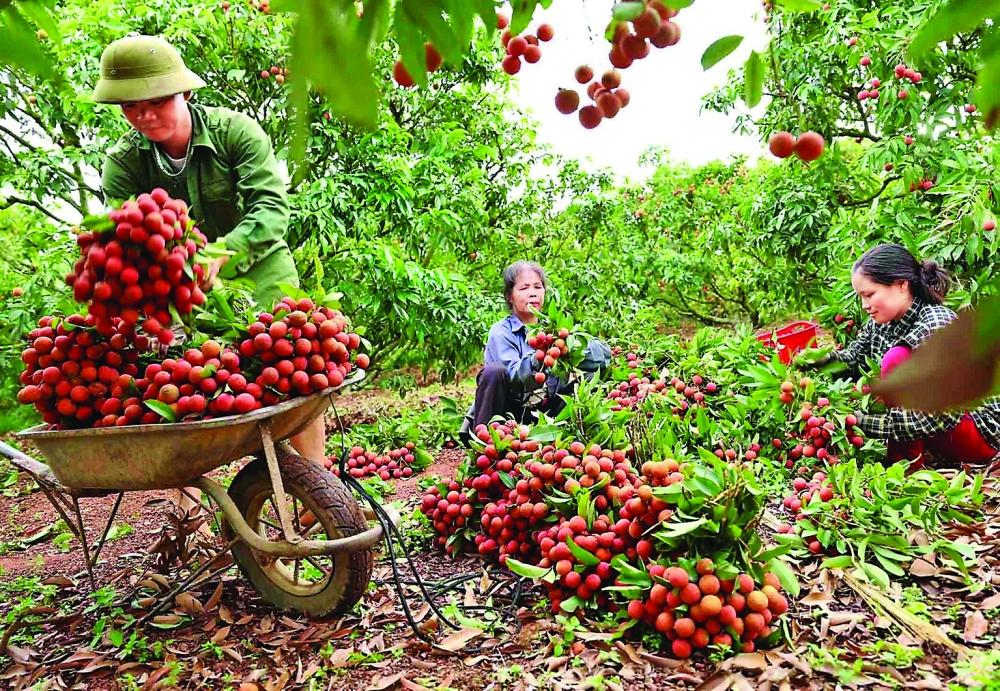 vietnams fruit vegetable sector eyes bright export prospects