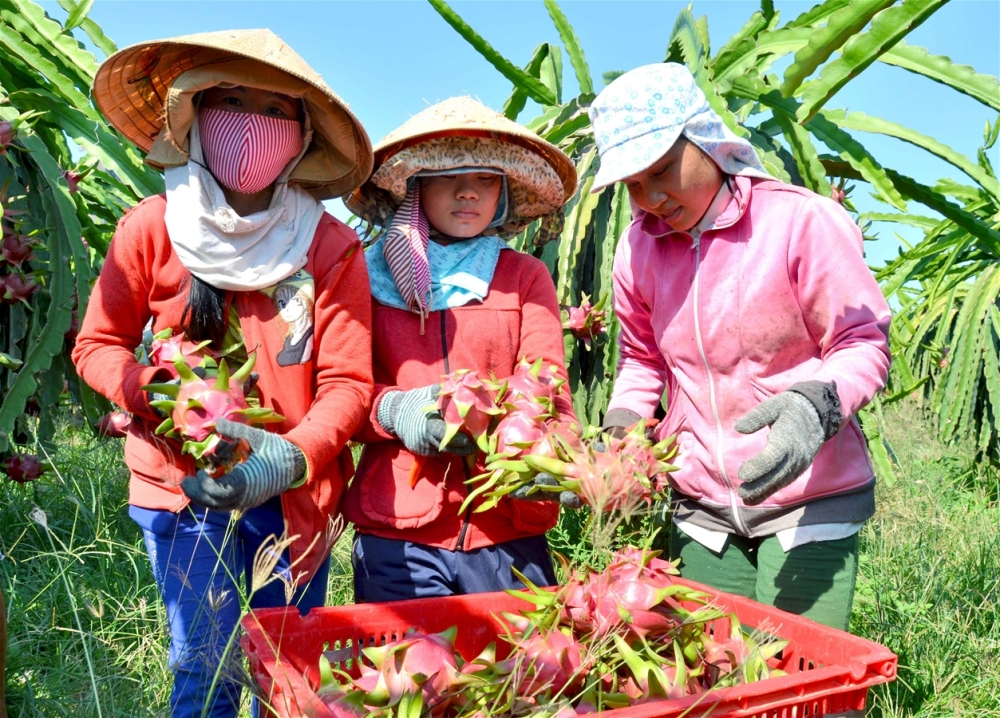 vietnamese farm produce makes inroads in discerning markets