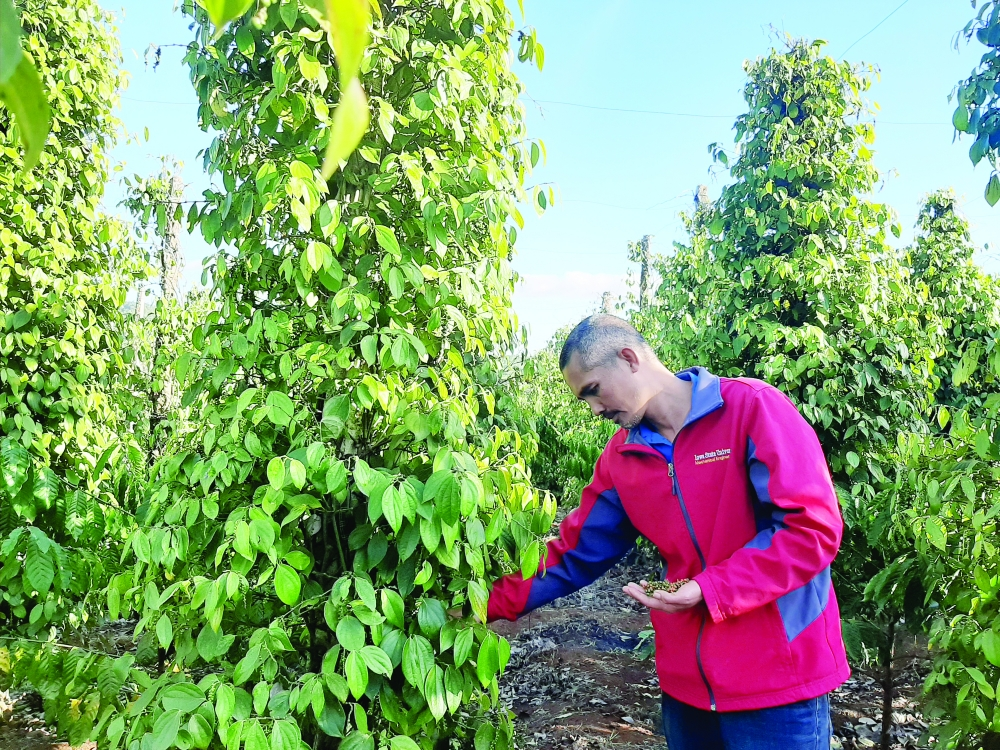 potential of cooperatives in organic farming development untapped
