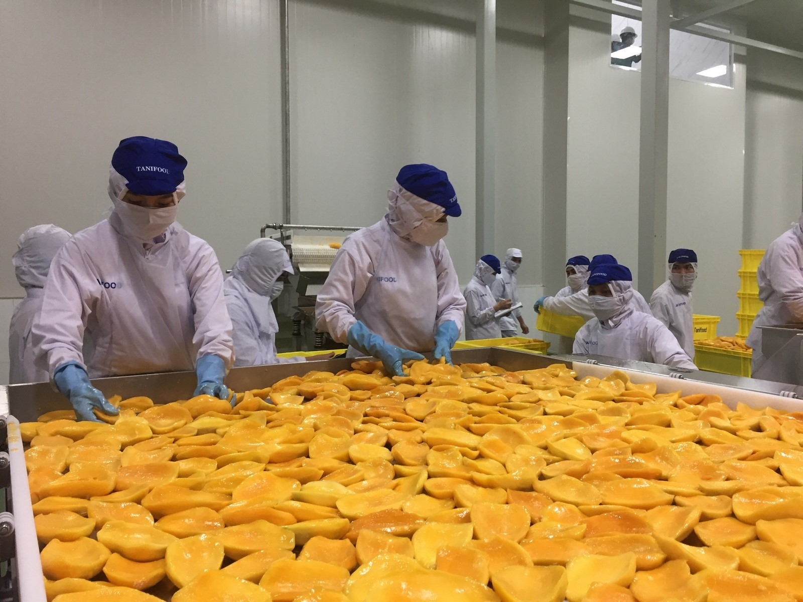 processing industry brightens january foreign trade picture