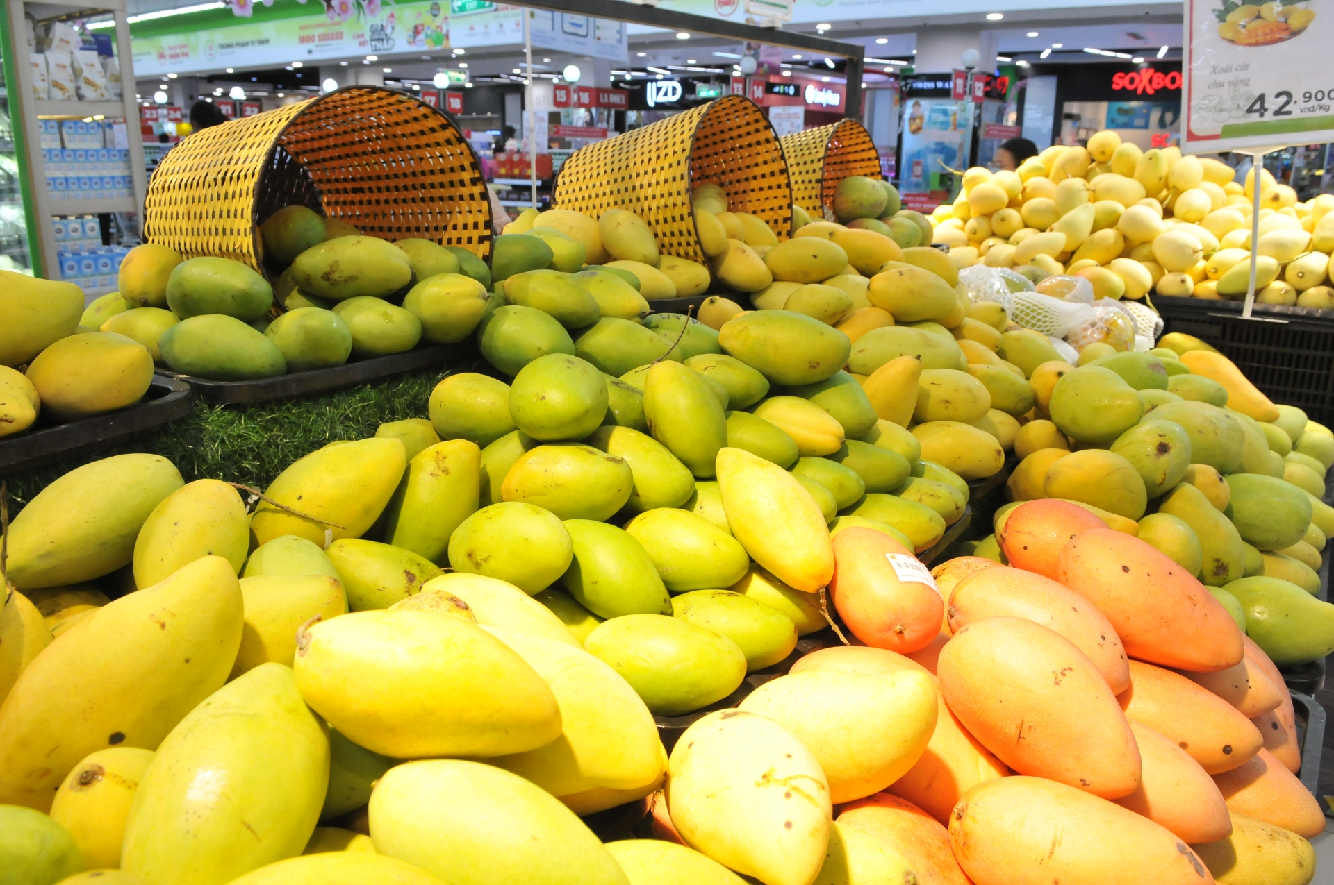 fruit vegetable exports expected to thrive this year