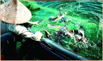 binh dinh province industry promotion helps fisheries development