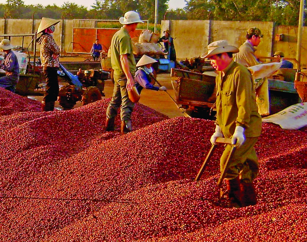 dak nong province helps produce processing business