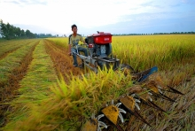 mekong delta farmers urged to mobilize sci tech