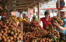 vietnam overcomes covid 19 barriers to ensure lychee exports