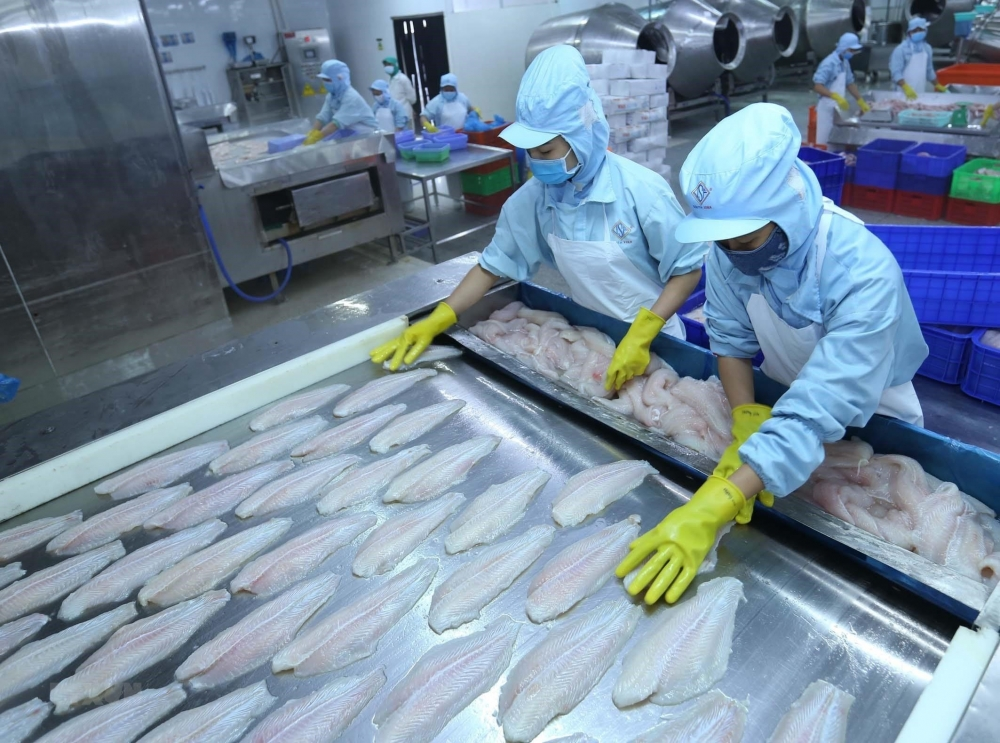 things go swimmingly for seafood exports to cptpp