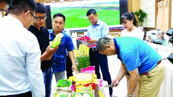 vietnam boosts rice quality to increase china market share