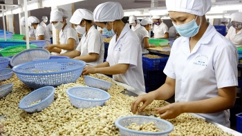 europeans are nuts about vietnam cashews