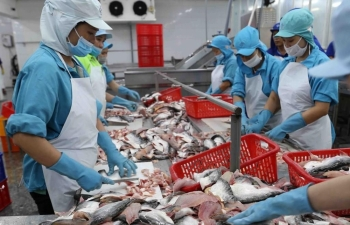 tightened controls imposed on antibiotic residues for tra fish exports