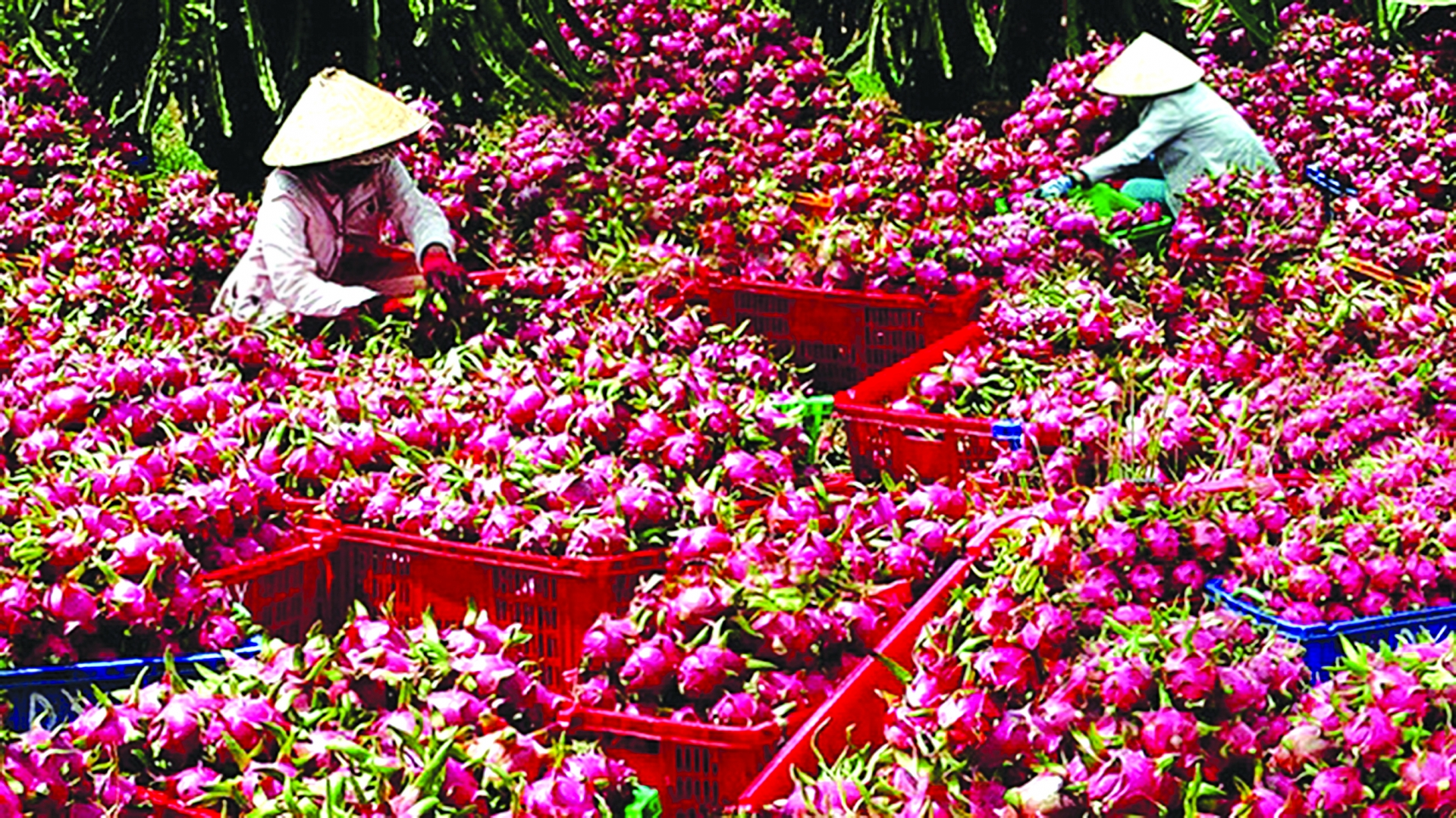 government encourages domestic consumption of farm produce