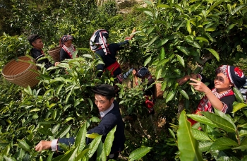 teatime in ha giang province