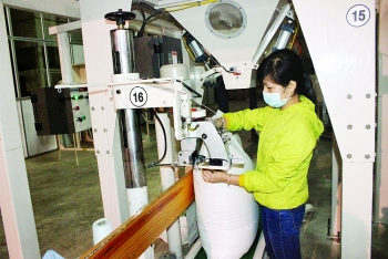 bright eight month export picture for domestic firms