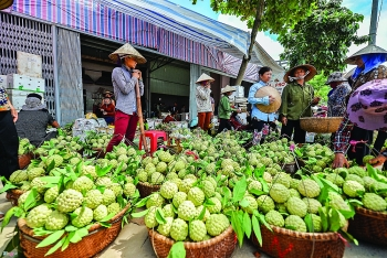 vietnam looks to china for chi lang custard apple exports