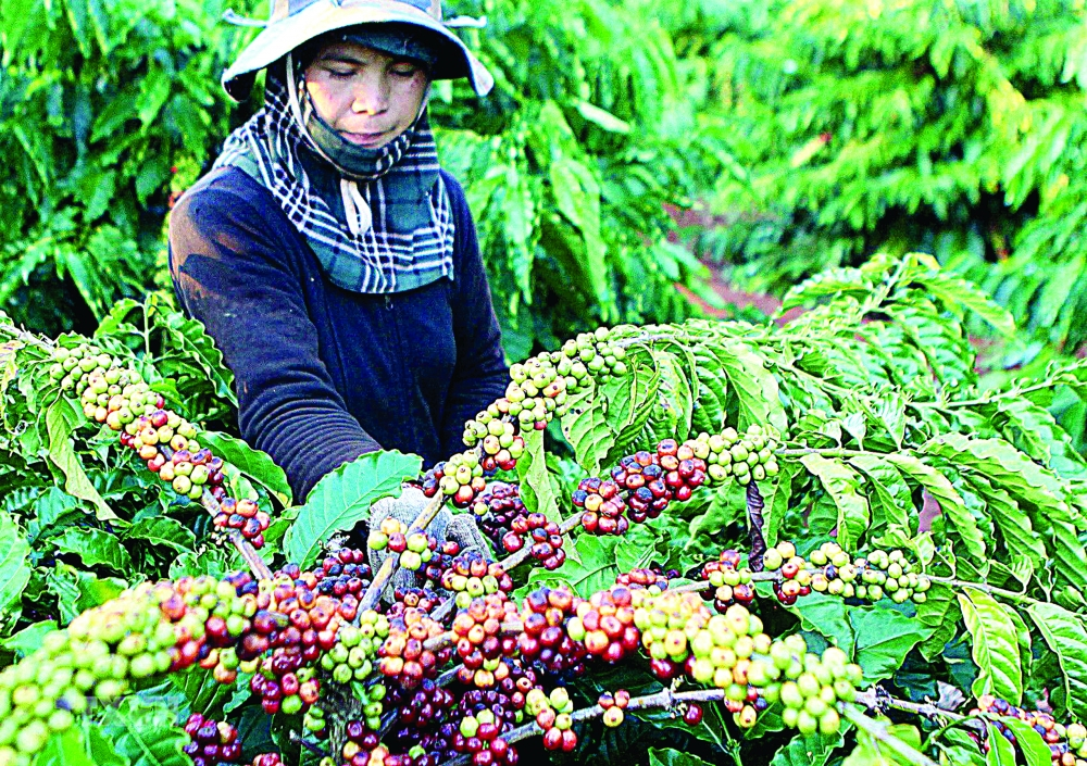 russian demand for imports holds promise for vietnamese produce