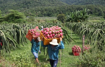 vietnam urges exporters to use official trade channels to china