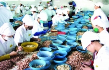 vietnams demand supply cashew export paradox