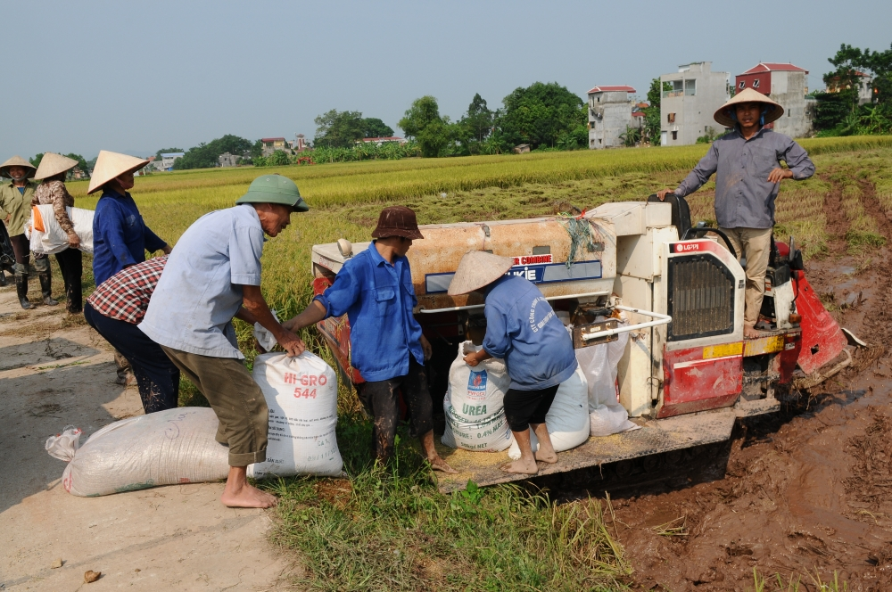improved vietnamese rice meets eu standards says top official