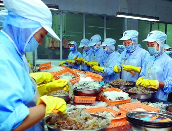 shrimp by products hold gold mine potential for vietnamese processing