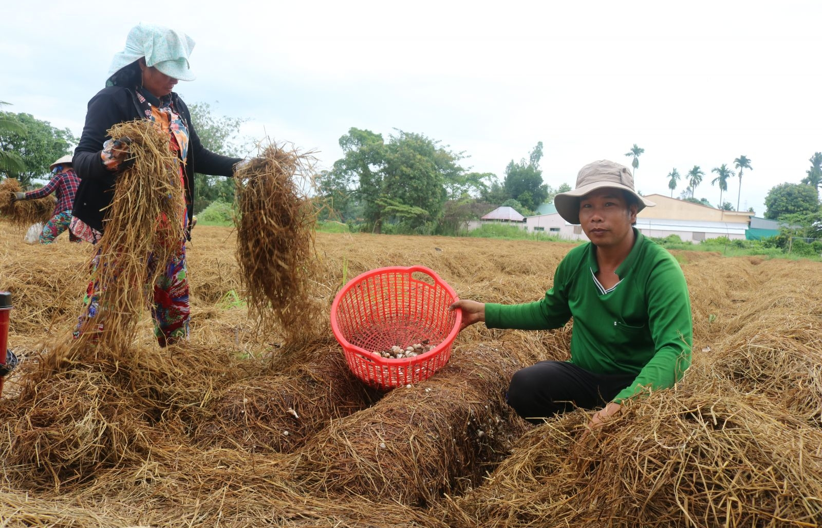 appropriate policies needed to boost agricultural by product efficiency
